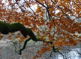 Eventyrlige Træer